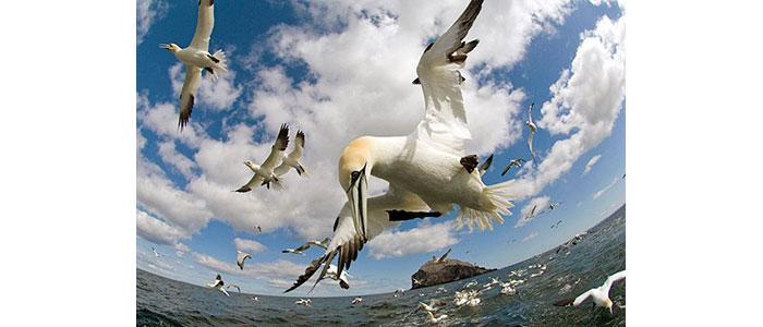 Видеозаснемане на птици - Статии.com