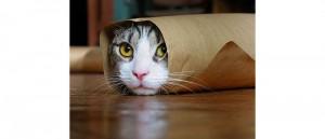 Котките обичат да ви дразнят - Статии.com