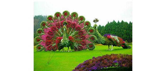 Цветя и тяхната символика - Статии.com