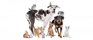 Портал за животни - Статии.com