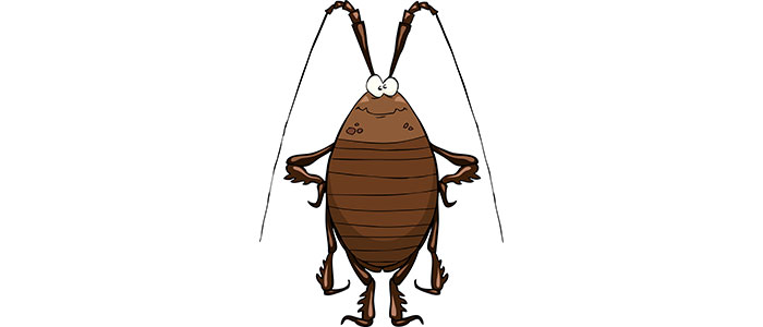 Противодействие срещу хлебарки и насекоми - Статии.com