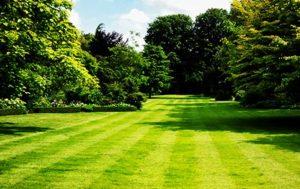 Дворно озеленяване на ниска цена